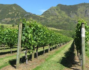 New Zealand Wine online